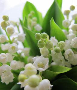 muguet-bouquet.jpg